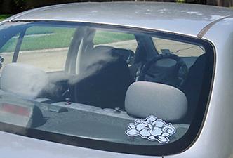 stuck_on_maui_car